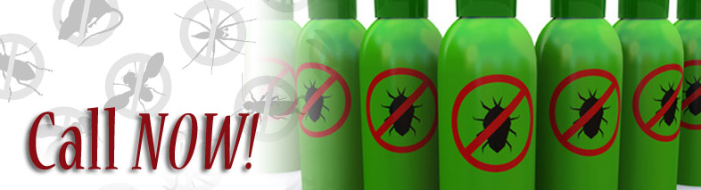 Pest Control Innisfil - Learn More About Us.